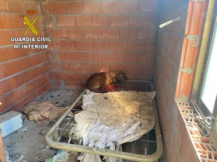 El Seprona localiza 15 perros en Poveda de la Sierra en condiciones higiénico sanitarias muy deficientes